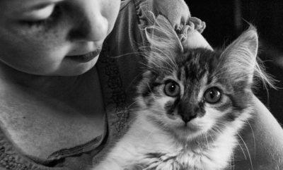 Gatos e crianças