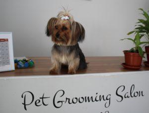Pet Groomming