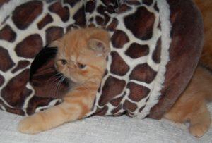 bingadeiras do gatinho
