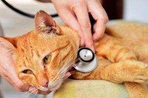 doenças gato