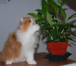 gatinho e planta