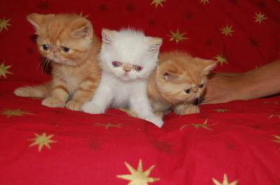 gatinhos exoticos