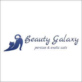 Gatos persas, exoticos. Cuidado i criaçao - beauty-galaxy