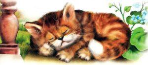 senilidade dos gatos