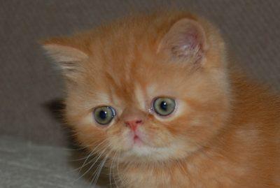 Sentidos felinos como a interação dos gatos com o seu ambiente
